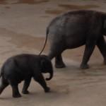 elefanten-500